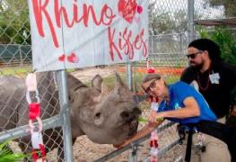 Muere rinoceronte negro del zoológico de Miami el más adulto de Norteamérica
